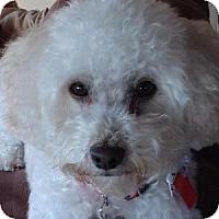 Adopt A Pet :: Snoopy - La Costa, CA