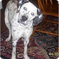 Adopt A Pet :: Nala - Evansville, IN