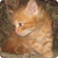 Adopt A Pet :: Raylan - Dallas, TX