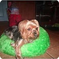 Adopt A Pet :: Rylie - Fairfax, VA