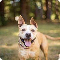 Adopt A Pet :: Kali - Portland, OR