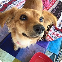Adopt A Pet :: Spin - Los Angeles, CA