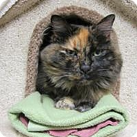 Calico Cat for adoption in Quilcene, Washington - Catrina