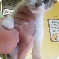 Adopt A Pet :: Angelo - North Highlands, CA
