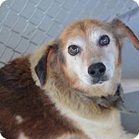 Adopt A Pet :: Benji - Virginia Beach, VA