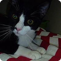 Adopt A Pet :: Louis - Hamburg, NY