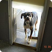 Adopt A Pet :: LILLY - Sandusky, OH