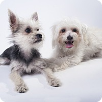 Adopt A Pet :: Whisket - Los Angeles, CA