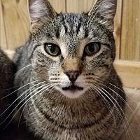 Adopt A Pet :: Brigot's Sid - Yukon, OK