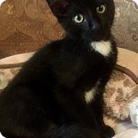 Adopt A Pet :: Tito - Edmond, OK