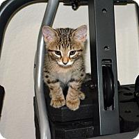 Adopt A Pet :: Dodge - Fort Worth, TX