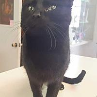 Adopt A Pet :: Aubrey - McPherson, KS
