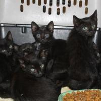 Adopt A Pet :: Aiden - Russellville, KY