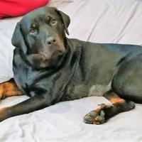 Adopt A Pet :: Athena - Beaumont, TX