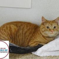 Adopt A Pet :: Frye - Belleville, MI