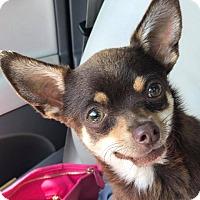 Adopt A Pet :: GEORGE - Albuquerque, NM