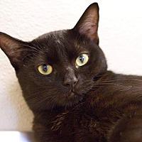 Adopt A Pet :: Nini - Grayslake, IL