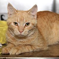 Adopt A Pet :: Skittles (Spayed) - Marietta, OH