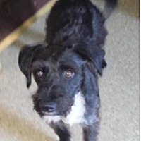 Adopt A Pet :: Sebastian - Spring, TX