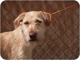 Terrier (Unknown Type, Medium)/Hound (Unknown Type) Mix Dog for adoption in El Cajon, California - Andy