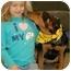 Photo 2 - Shepherd (Unknown Type)/Terrier (Unknown Type, Medium) Mix Dog for adoption in Osseo, Minnesota - Sassy