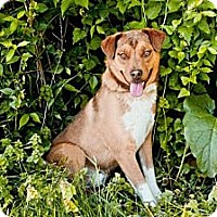 Adopt A Pet :: # 158-13 RESCUED! - Zanesville, OH