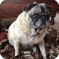 Adopt A Pet :: Huck - Hinckley, MN
