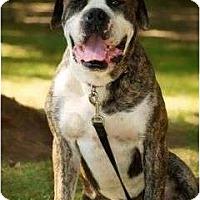 Adopt A Pet :: Ben - conyers, GA