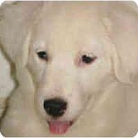 Adopt A Pet :: Summer - Mesa, AZ