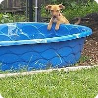 Adopt A Pet :: Pixie - Marlton, NJ