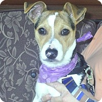 Adopt A Pet :: Monty - cedar grove, IN