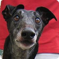 Adopt A Pet :: Evan - Oak Ridge, NC