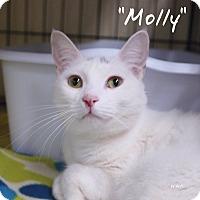 Adopt A Pet :: Molly - Ocean City, NJ