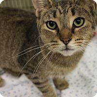 Adopt A Pet :: Gloria - Medina, OH