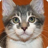 Adopt A Pet :: Phelps - Irvine, CA