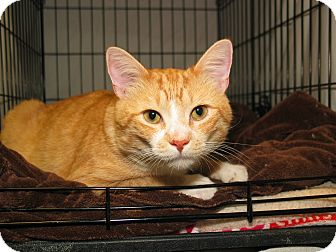Domestic Shorthair Cat for adoption in Milford, Massachusetts - Porch
