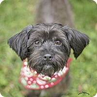 Adopt A Pet :: Harry - Kingwood, TX