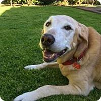 Adopt A Pet :: Magic - San Francisco, CA