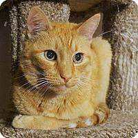 Adopt A Pet :: Sunny - Encinitas, CA