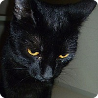 Adopt A Pet :: Anise - Hamburg, NY