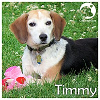 Adopt A Pet :: Timmy - Pittsburgh, PA