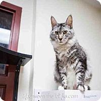 Adopt A Pet :: ELYSE - Raleigh, NC