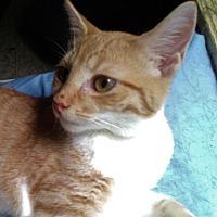 Adopt A Pet :: Burt - Morganton, NC