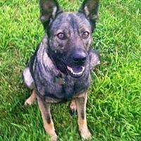 Adopt A Pet :: LADY-LANIER - Sebec, ME