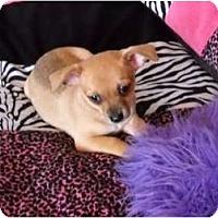 Adopt A Pet :: Pueblo - Glastonbury, CT
