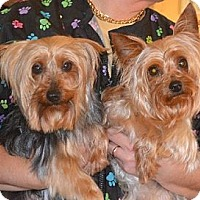 Adopt A Pet :: Lucy & Lily - Bonded Pair - Greensboro, NC