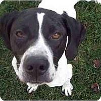 Adopt A Pet :: Zachary-ADOPTION PENDING! - Columbus, OH