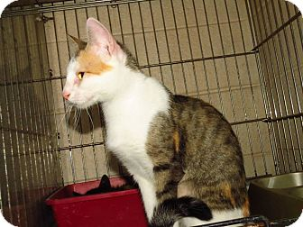 Domestic Shorthair Cat for adoption in Henderson, North Carolina - Jasmine & 5 Kittens