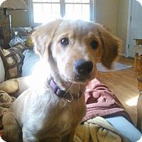 Adopt A Pet :: Nellie - Marlton, NJ