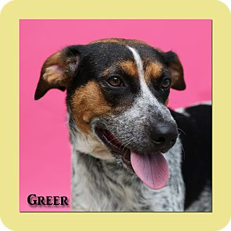 Blue Heeler/Coonhound Mix Dog for adoption in Aiken, South Carolina - Greer